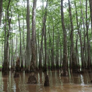 swamp sq