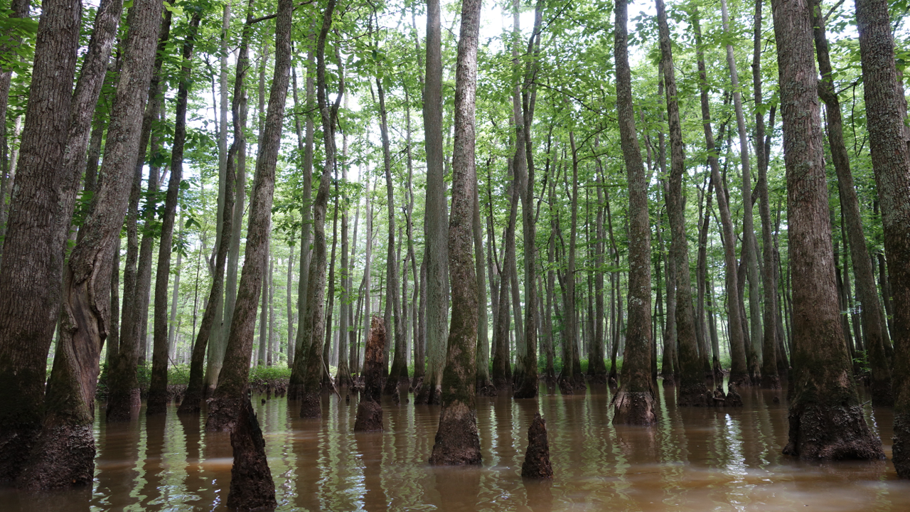 lost-in-the-swamp-featured-image